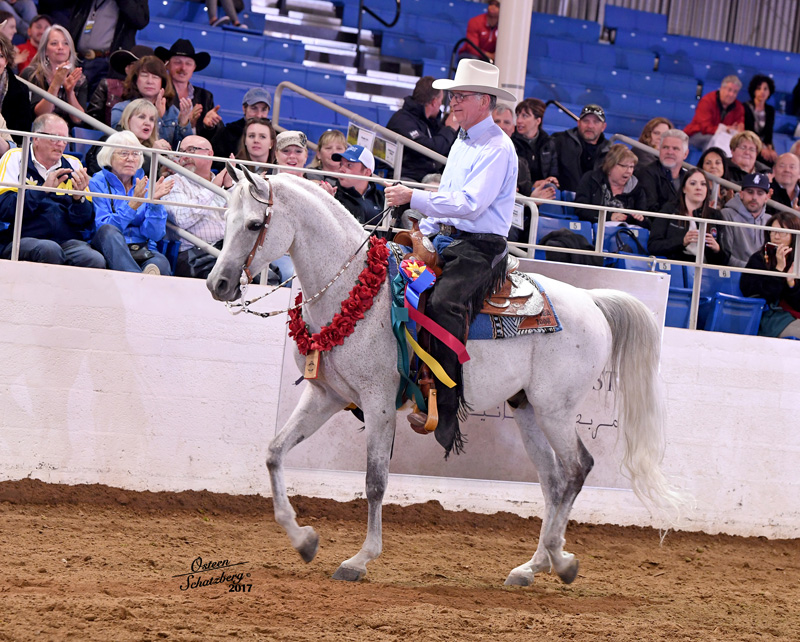 2017 Scottsdale Arabian Horse Show: Dick Walden winning Silver Saddles Championship
